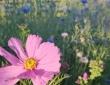 bordure fleurie.JPG