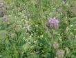 Réalisation de bordures avec mélanges de fleurs le long de chemins