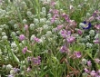 Bordures avec mélanges de fleurs