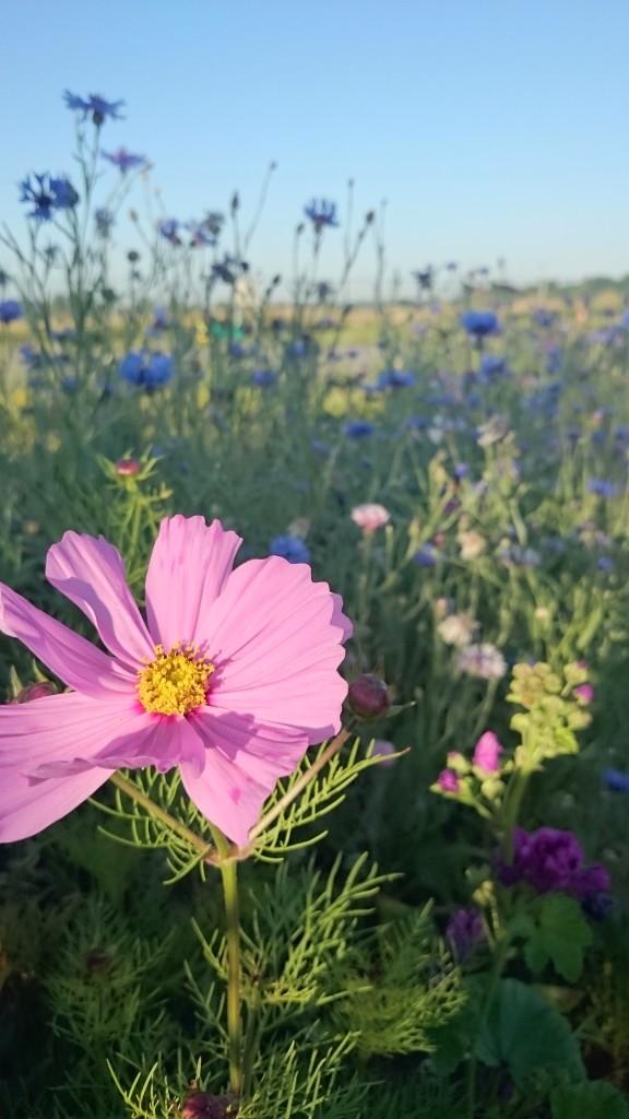 bordures et prairies fleuries